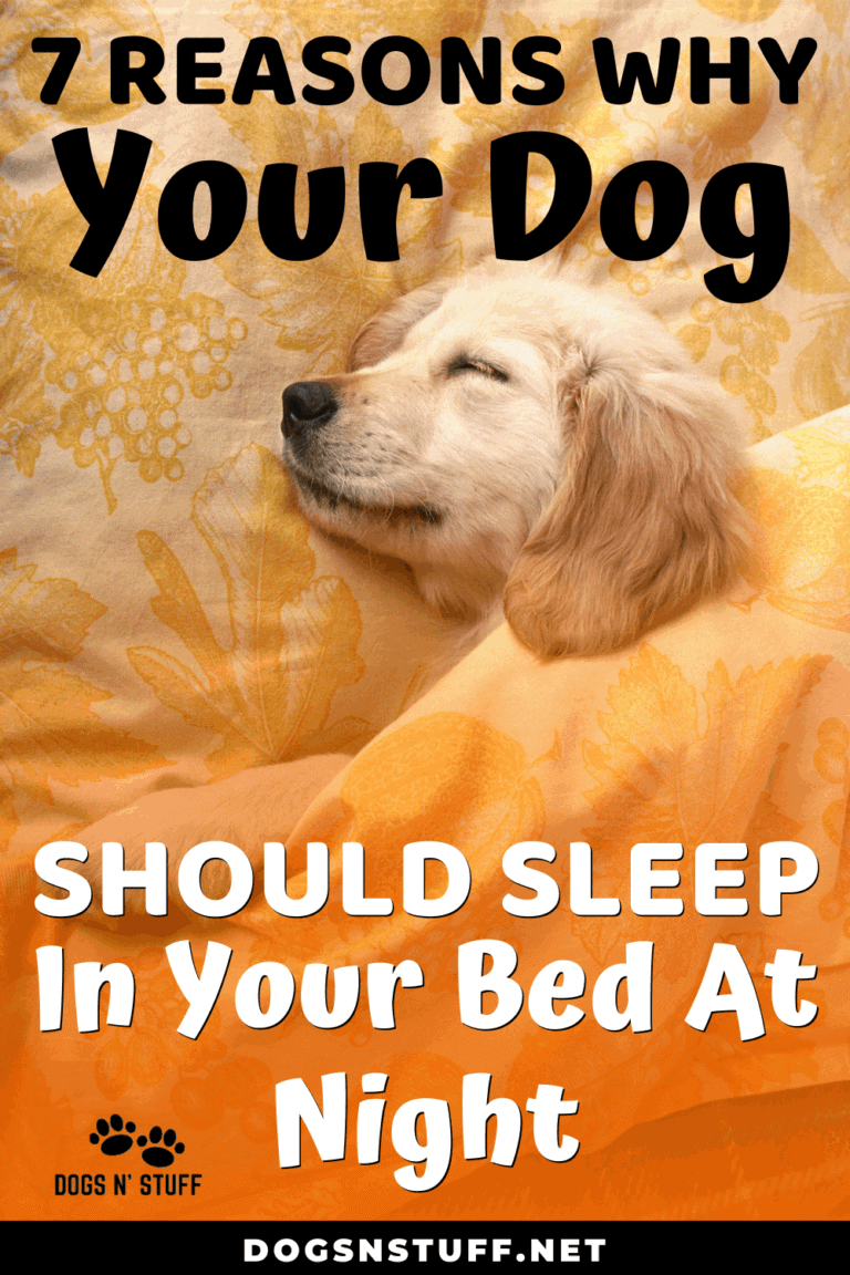 7 Amazing Reasons Why Your Dog Should Sleep In Your Bed At Night Sleeping Dogs Dog Training Dog Behavior