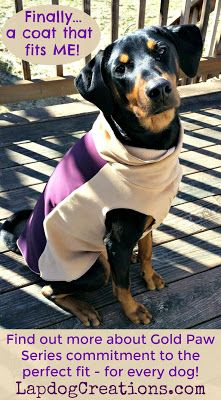 Penny loves her Portland Pullover because it was designed to fit her perfectly! #sponsored Dog Mom | Dog Products | Dog Coats | Review | Giveaway | Rescue Dog | Doberman