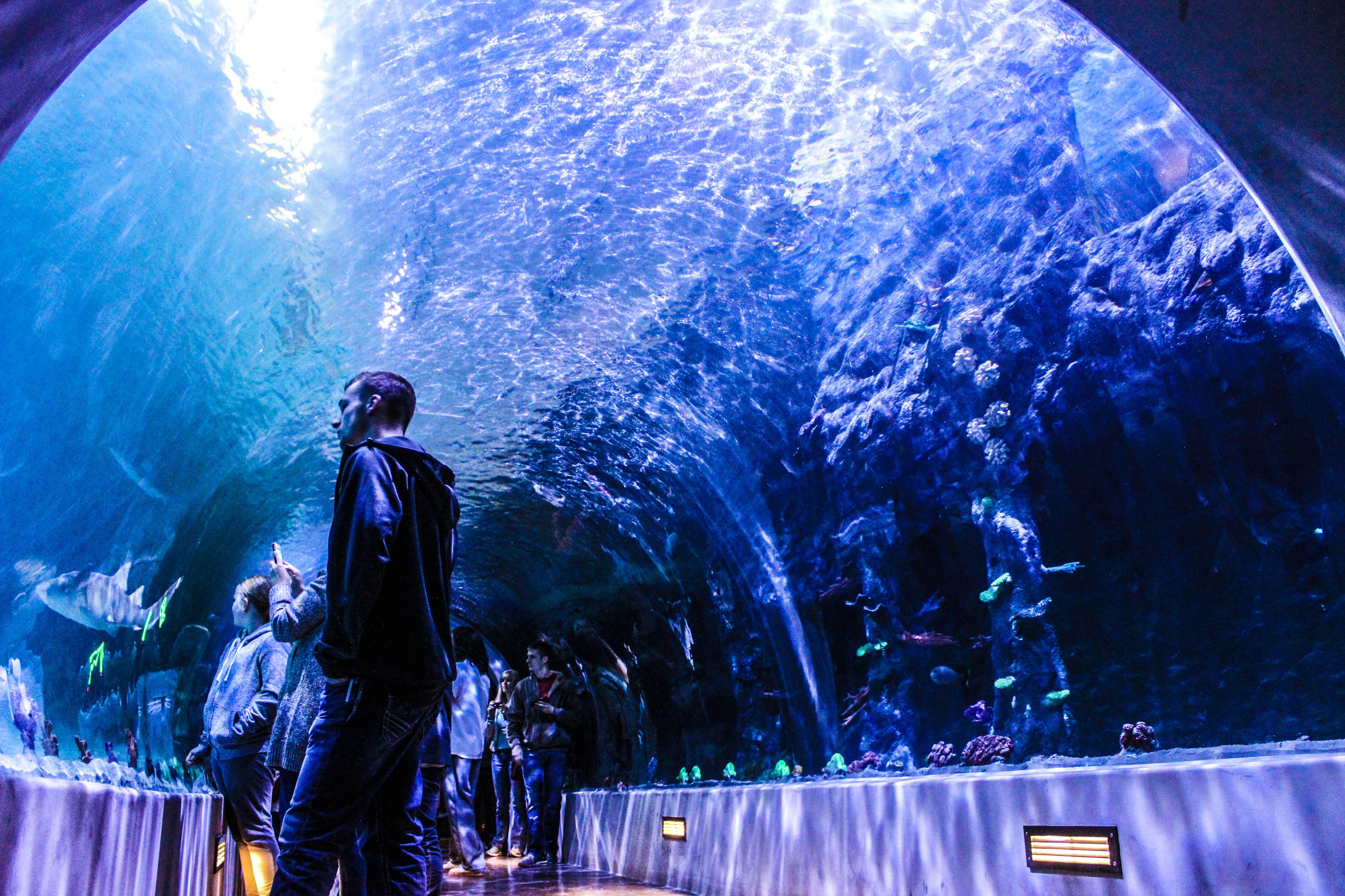 52d799b7d14ee38f40f63f1408592ac2 Frais De Aquarium Osaka Concept
