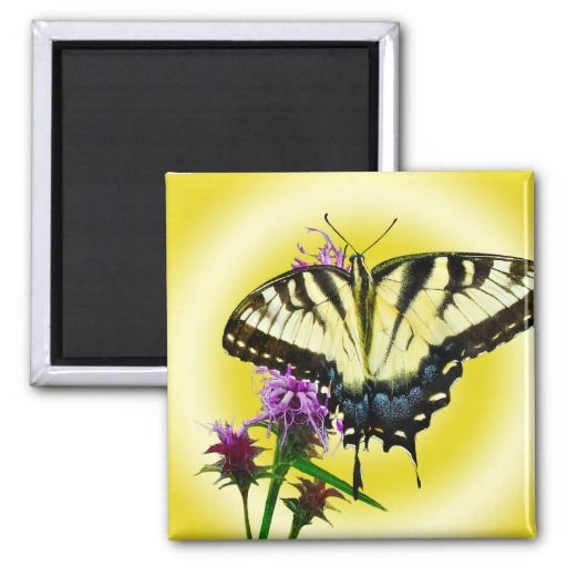 Eastern Tiger Butterfly picture Take in late summer in eastern Virginia. Multiple sizes are available. Great for home or office decor. Also a great gift idea for holidays, birthdays, anniversary, and house warning.