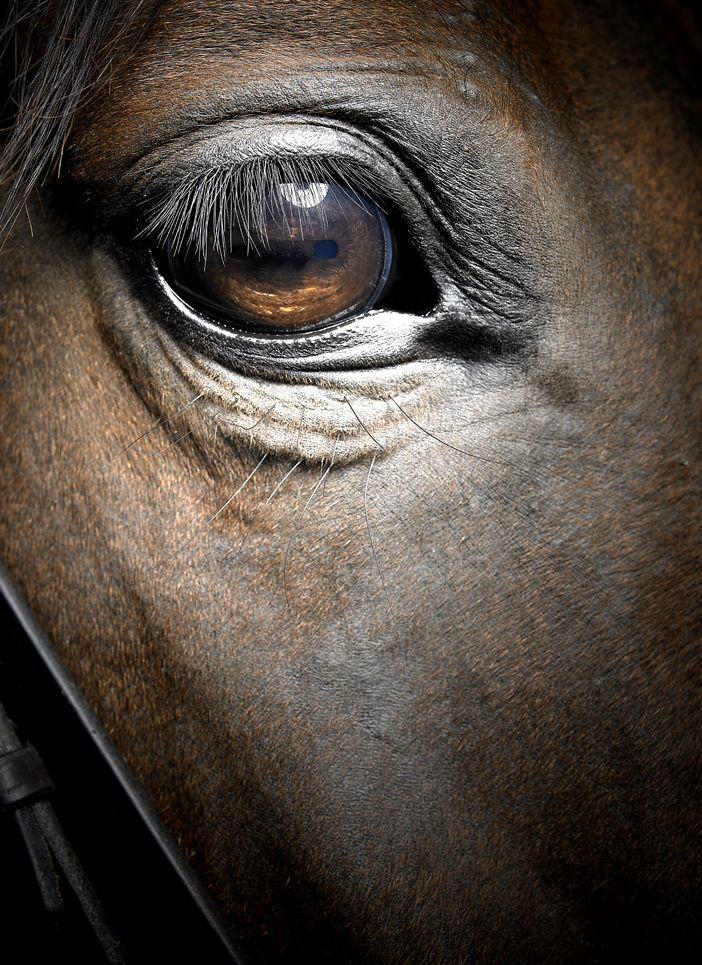 The Kindess Of A Horse S Eye Can Warm The Coldest Of Hearts Fotografie Di Cavalli Cavalli Bellissimi Foto Di Cavalli