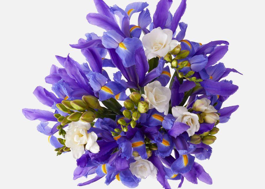 The Purple Iris Send Flower Bouquets In 2020 Purple Iris Flowers Bouquet Flower Delivery