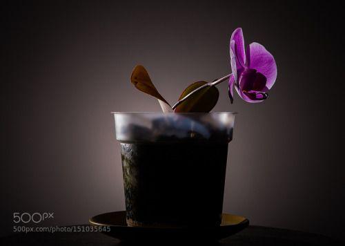 An orchid by slipchansky1 http://ift.tt/1VUUZYb