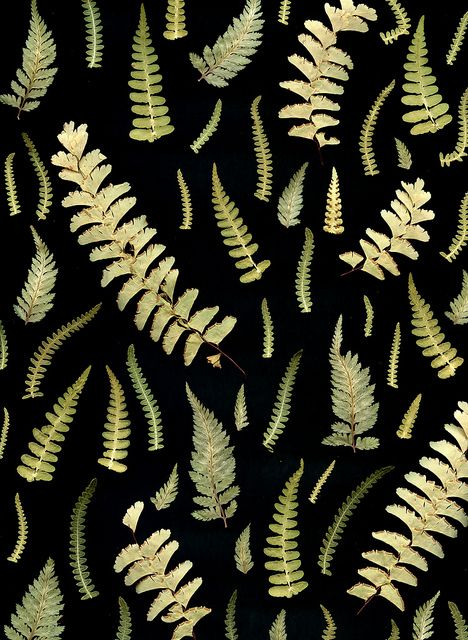 fern fronds by horticultural art.