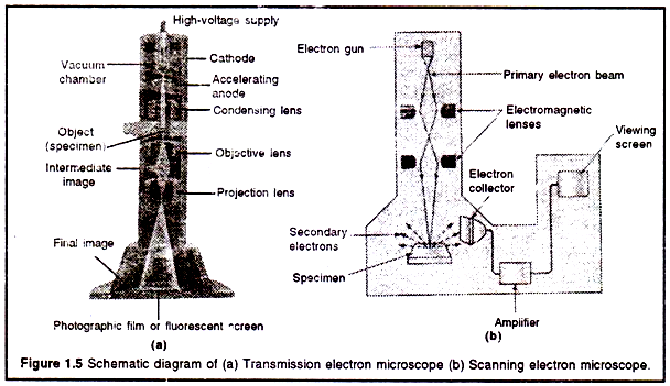 Schematic diagram of (a) Transmission electron microscope
