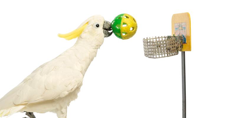 Bird Land - Pet Game v2.4.3  Pet Bird Games