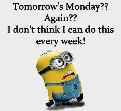 Funny Minion, Minion Stuff, Minion Jokes, Minions Quotes, Funny Qoutes, Funny  Sayings, Funniest Quotes, Funny Sarcastic, Too Funny