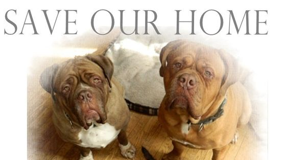 Renew The Sanctuary Licence For Valley Mastiff Rescue Renouvele Le Permis Annuel Du Refuge Valley Mastiff Rescue Mastiff Rescue Dog Boarding Animals