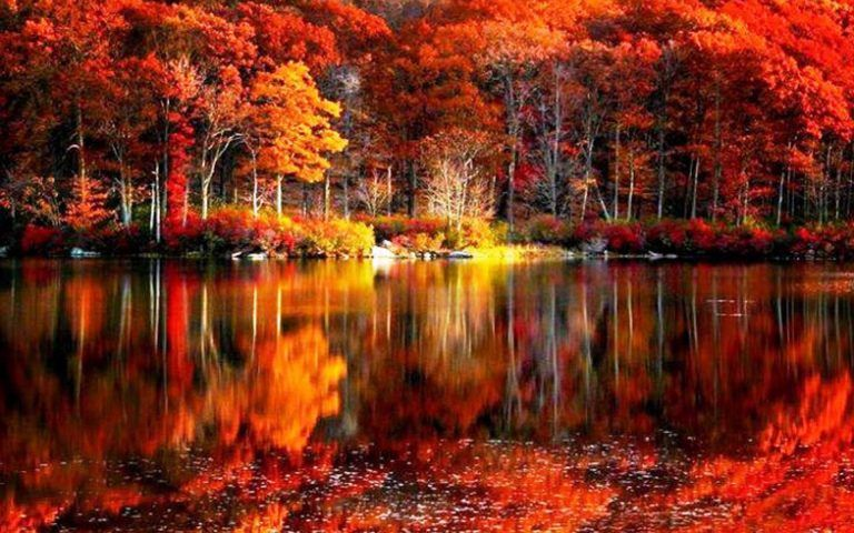 Fall Foliage Wallpaper Free Download Autumn Scenery Autumn Scenes Fall Pictures