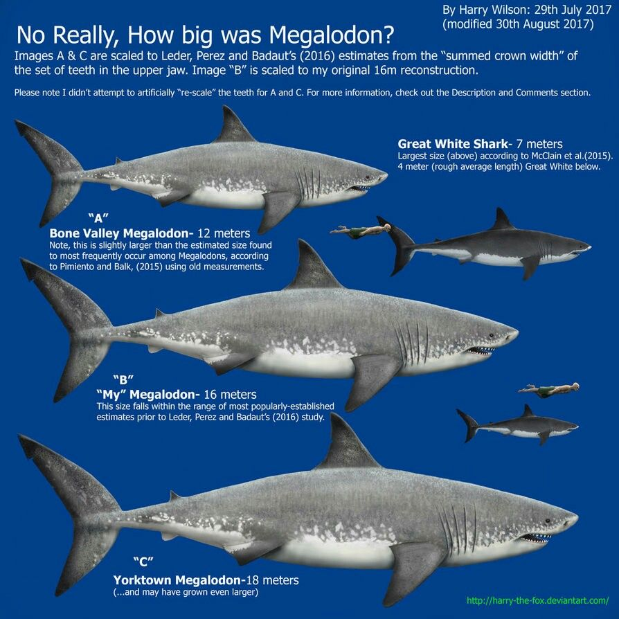 Megalodon Subspecies