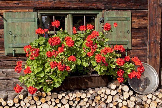 fenster einer alten almh tte chalet window austria repin pinterest almh tte fenster und. Black Bedroom Furniture Sets. Home Design Ideas