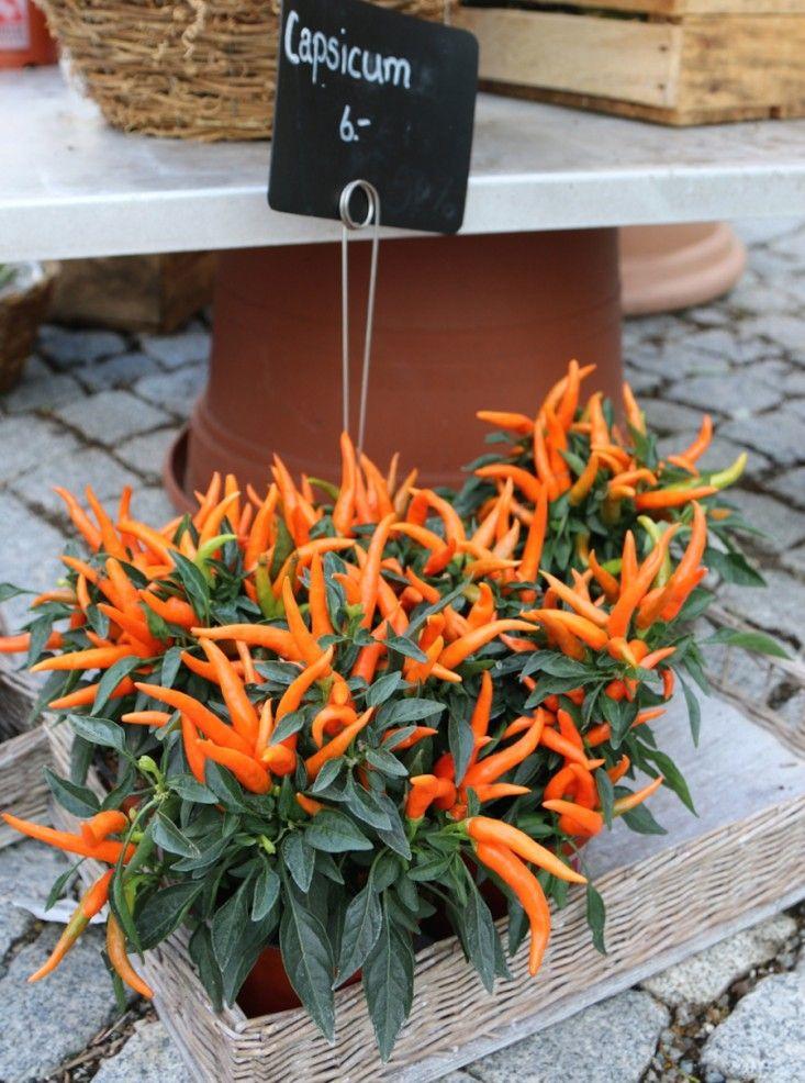 Shopper's Diary Blumen Flowers in Switzerland Temperos