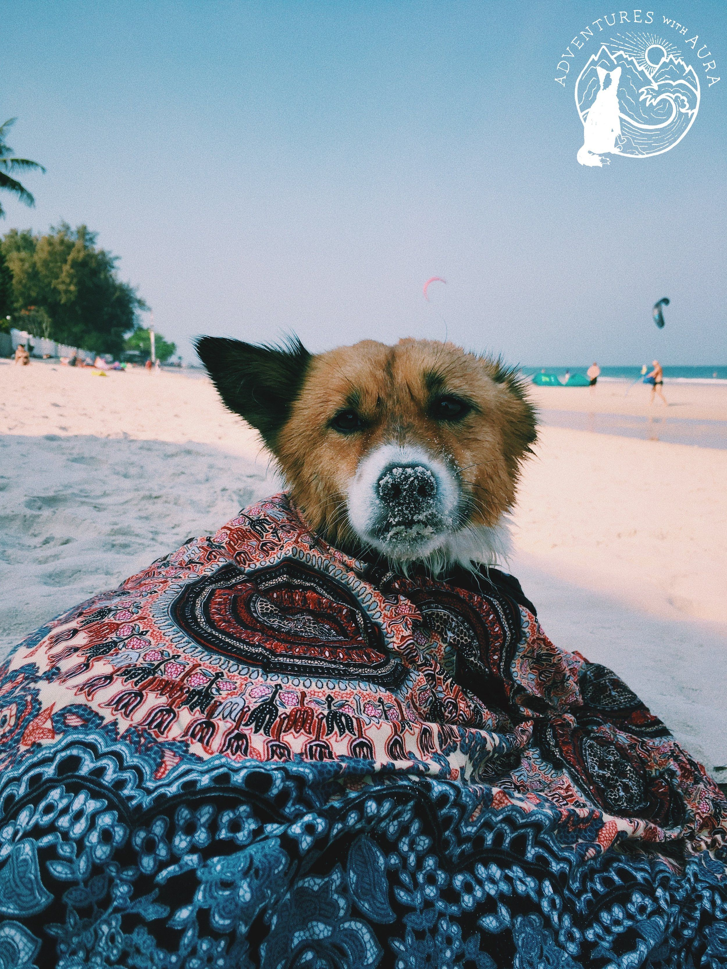 Hua Hin Beach Funny Looking Dogs Funny Looking Animals Animal