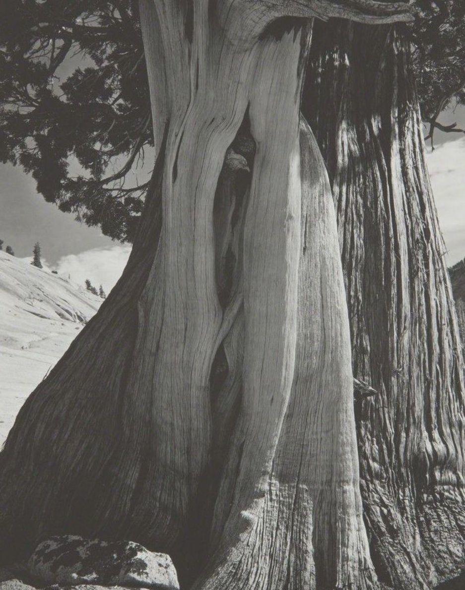 History of Art: Edward Weston