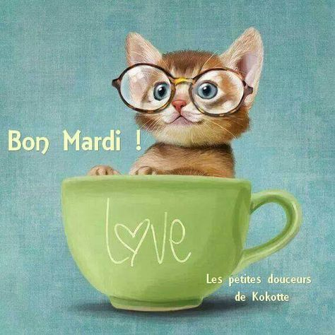 Bon Mardi Illustration De Chat Chat Fou Dessin Chat