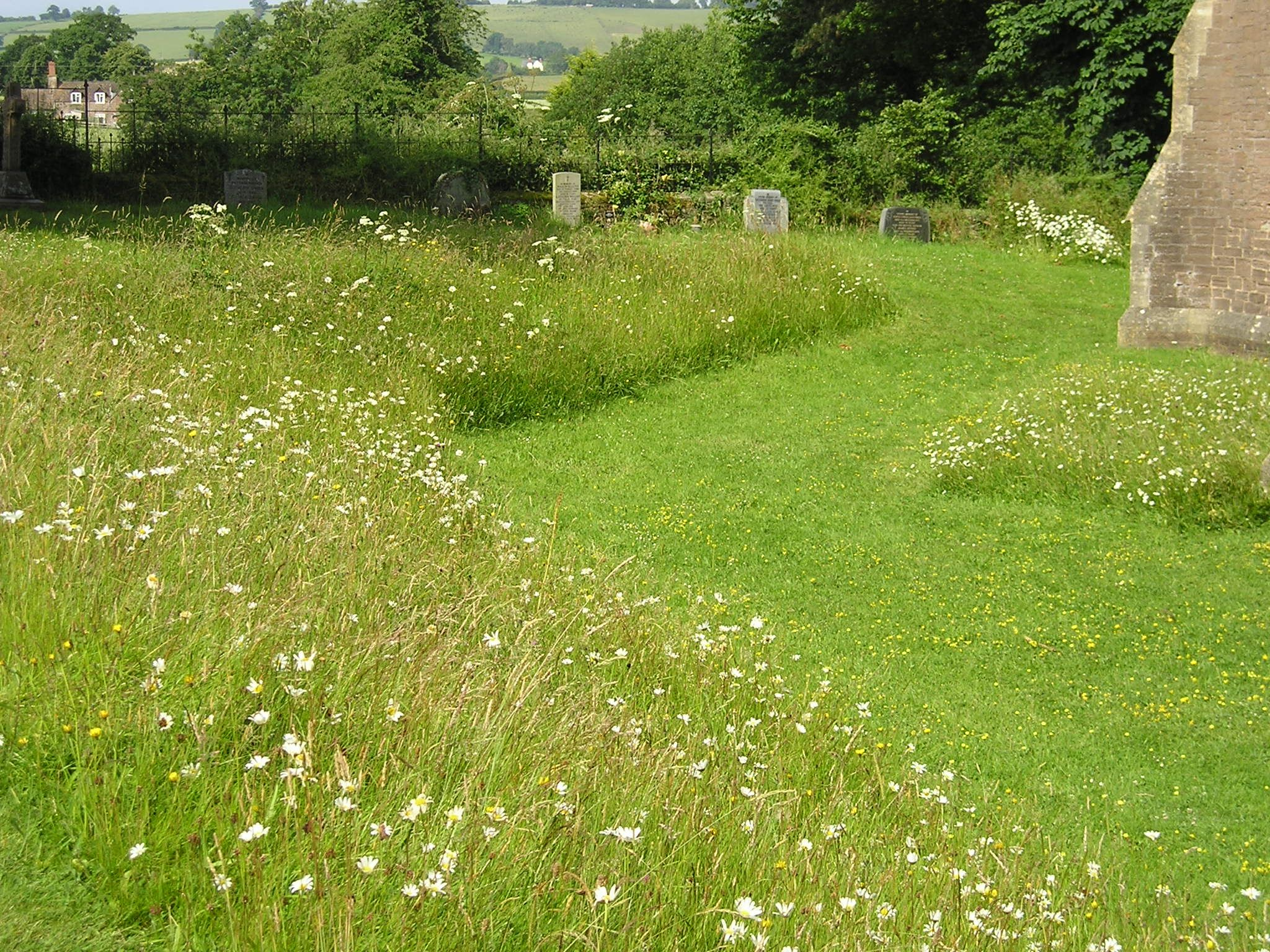 Image result for wildflowers in churchyards herefordshire""