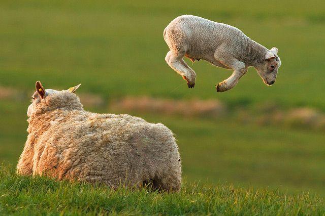 Hopps ... Frühlingsgefühle ... Guten Morgen, aufgewacht ... heute FRAUENTAG !!!