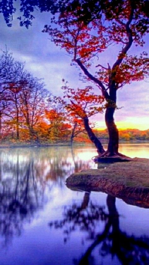Download 480x854 Landscape Cell Phone Wallpaper Category Nature Landscape Wallpaper Autumn Landscape Hd Nature Wallpapers