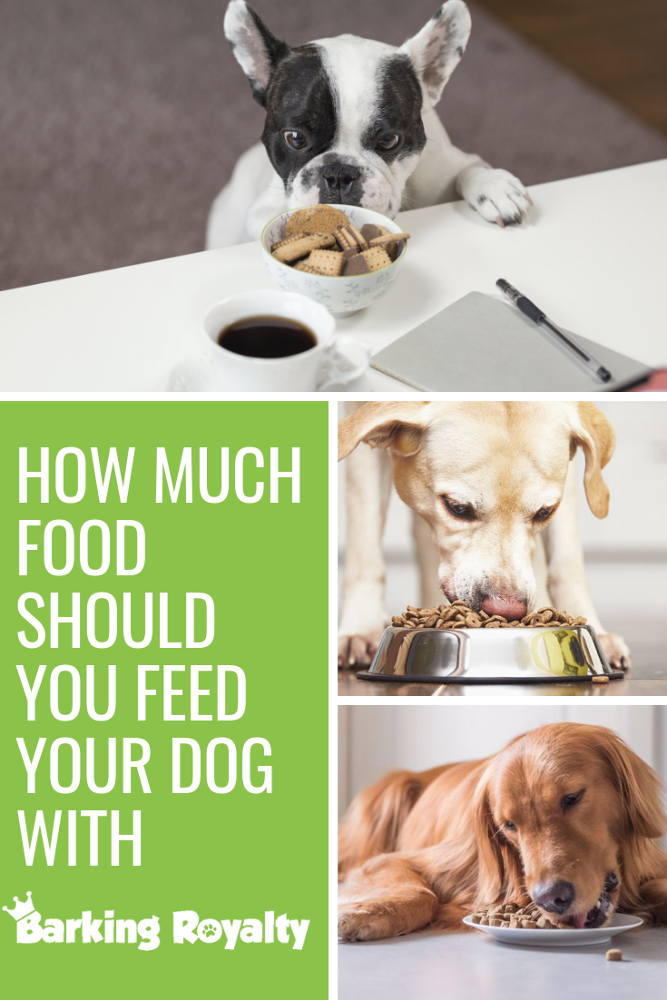 How Much Food Should You Feed Your Dog | Dogs, Your dog ...