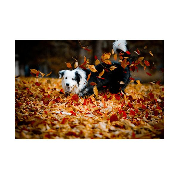 a love like war ❤ liked on Polyvore featuring pictures, photos, fall pictures, autumn and backgrounds