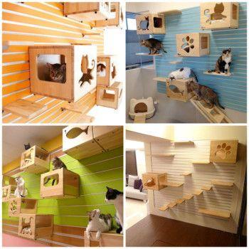Estantes y escalera de pared como rboles para gatos - Estantes para pared ...