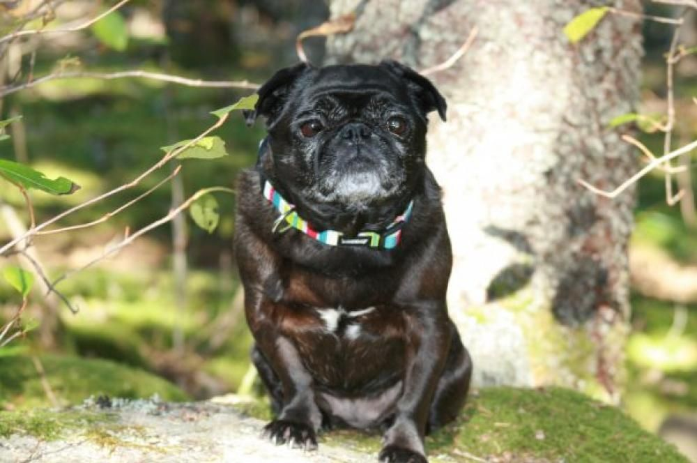 Pugita S Entry In Pet Valu S Calendar Casting Call Photo Contest With Images Casting Call Photo Contest Photo