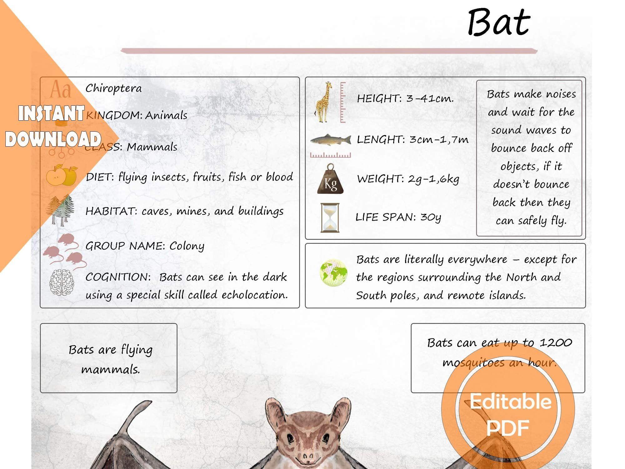 Mouse Amp Bat Unit Study Mega Printable Bundle Posters