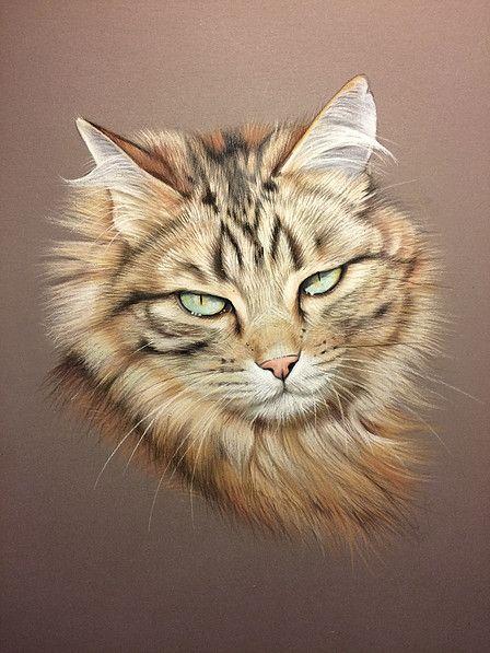chat au pastel peinture l 39 huile pinterest peinture. Black Bedroom Furniture Sets. Home Design Ideas