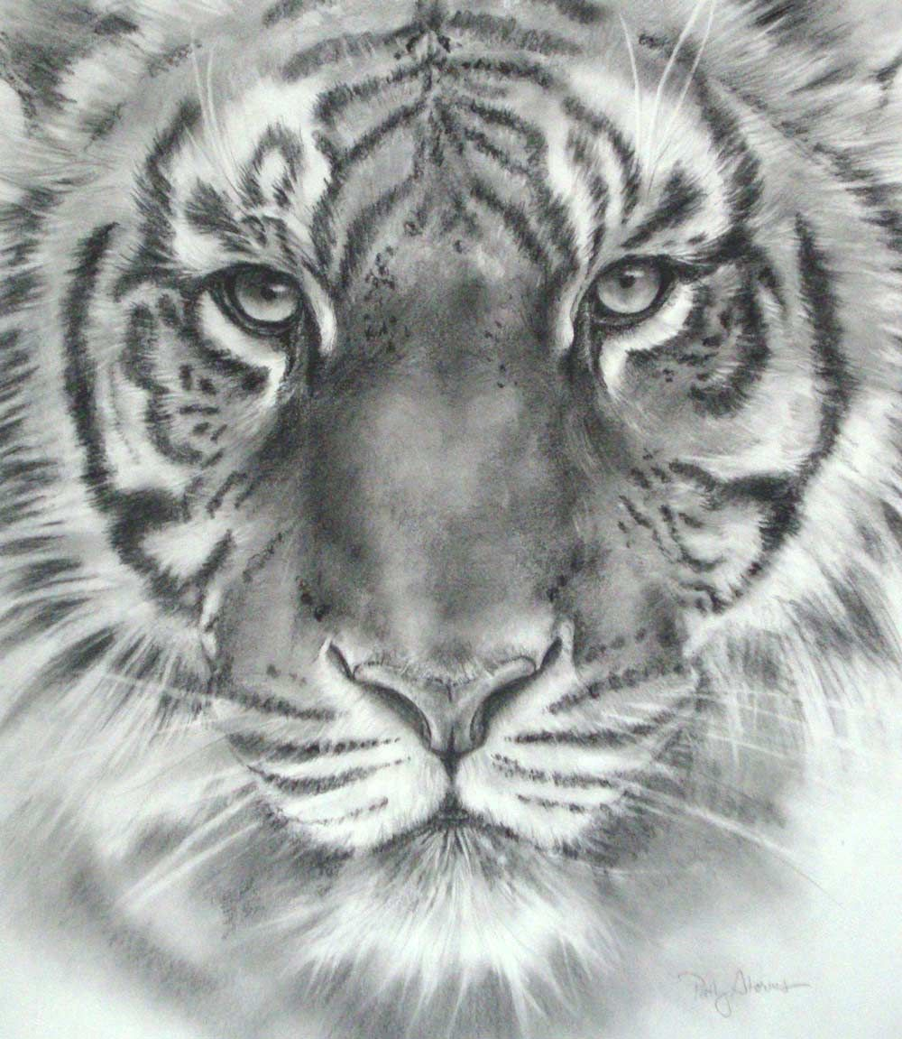 Tiger head drawings in pencil