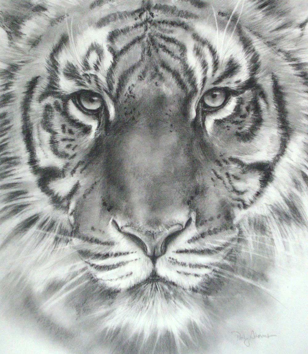   Tiger Head Drawings in Pencil