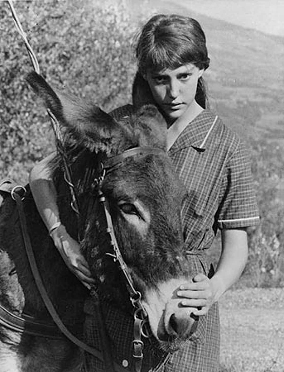 burro genius summary by folio weekly issuu burro genius blog  au hasard balthazar directed by robert bresson starring au hasard balthazar 1947 directed by robert bresson book web sampler burro genius paperback
