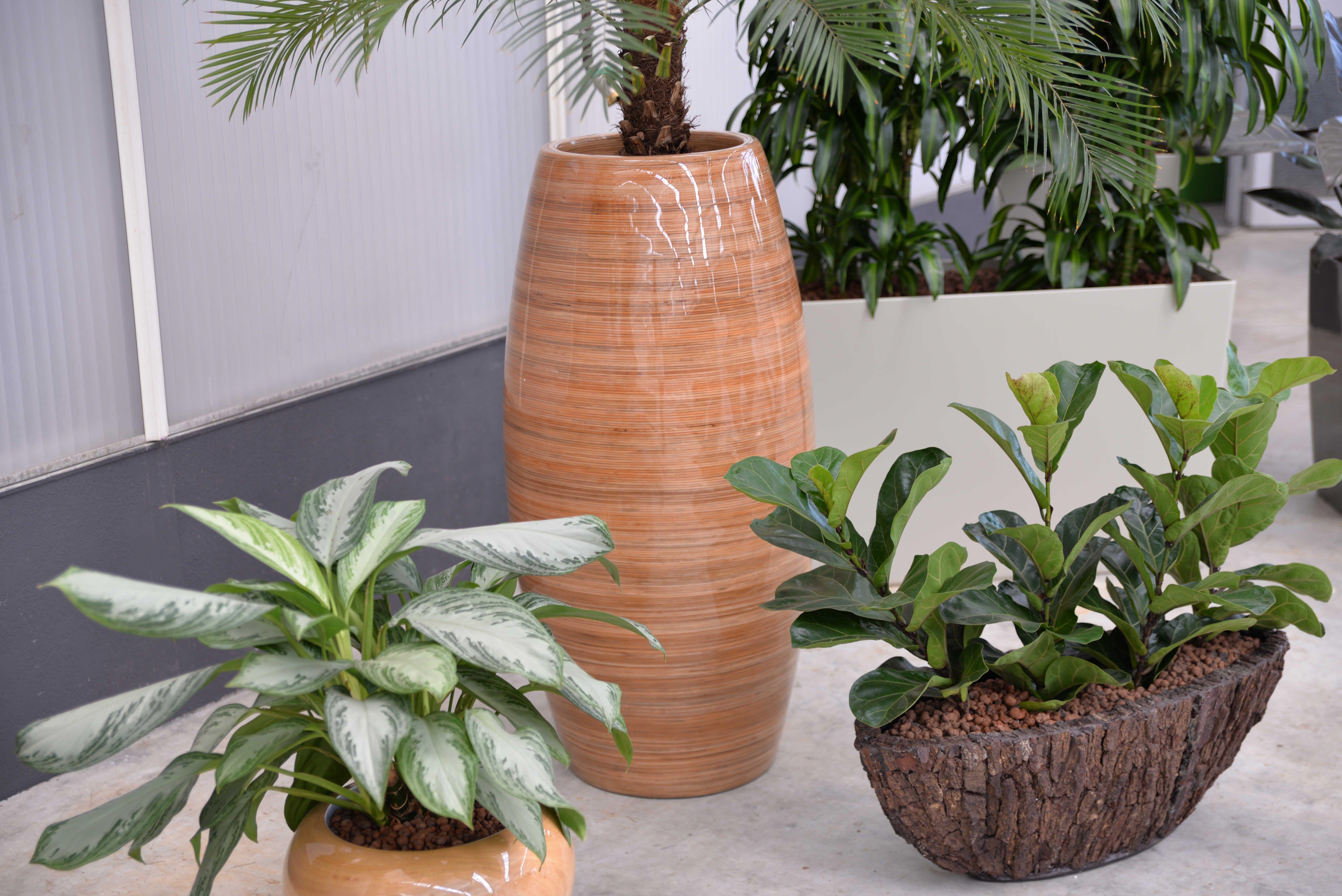 Raumbegrunung Pflanzenpflege Interior Design Interior Landscaping Innenraumbegrunung Buropflanze Zimmerpflanze Innenarchitektur Pflanzen Buropflanzen