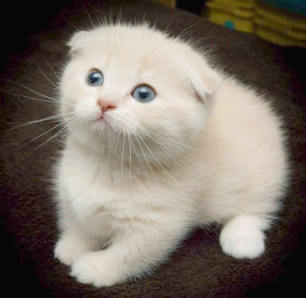 Ninja Cat Ready To Pounce Cats And Kittens