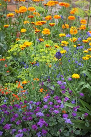 Pretty for the front garden maybe. Calendula, Ageratum and Dill