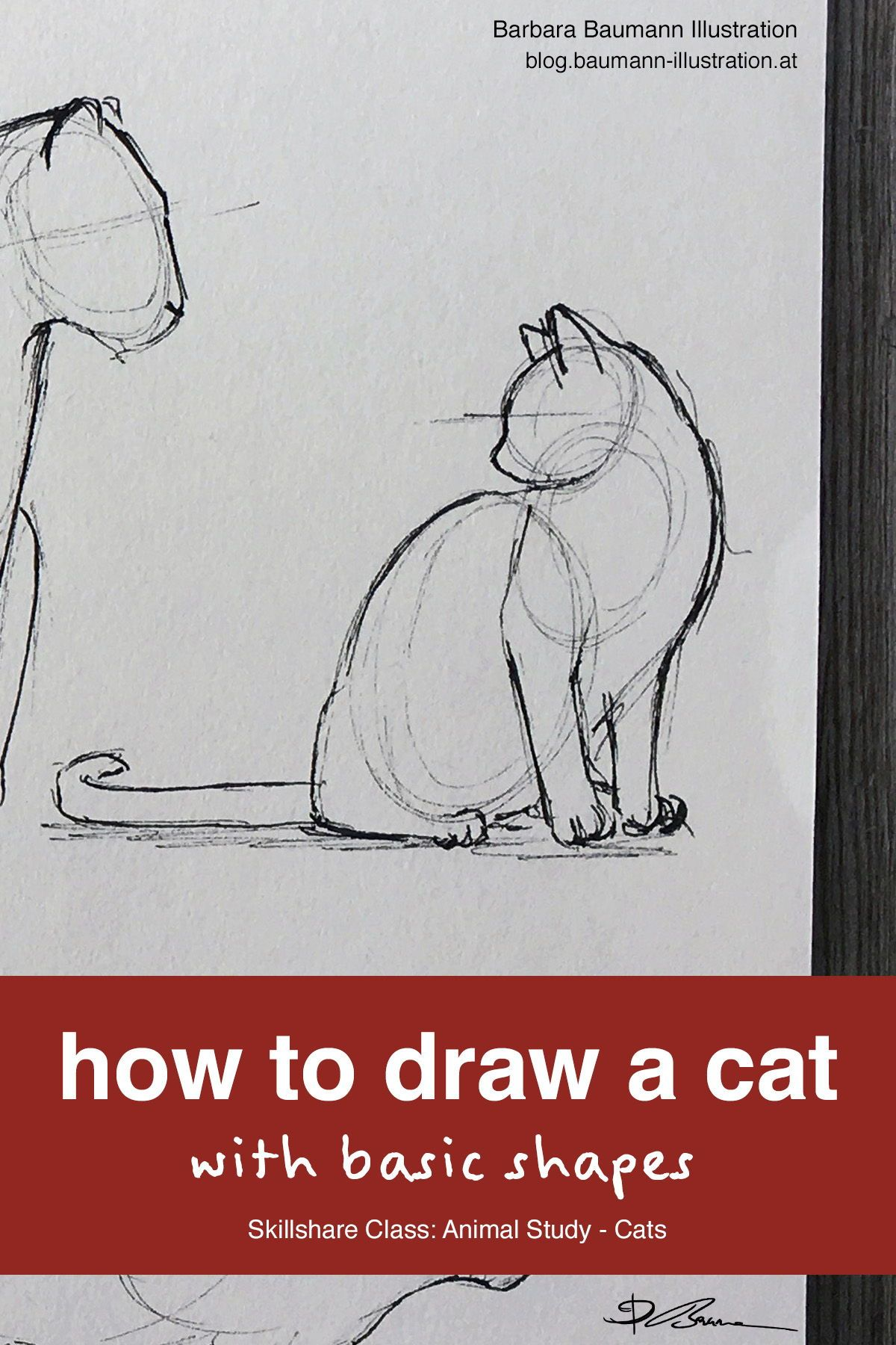 How To Draw A Cat With Basic Shapes Animal Sketch With Ink Cat Drawing Tutorial Animal Study Basic Sketching