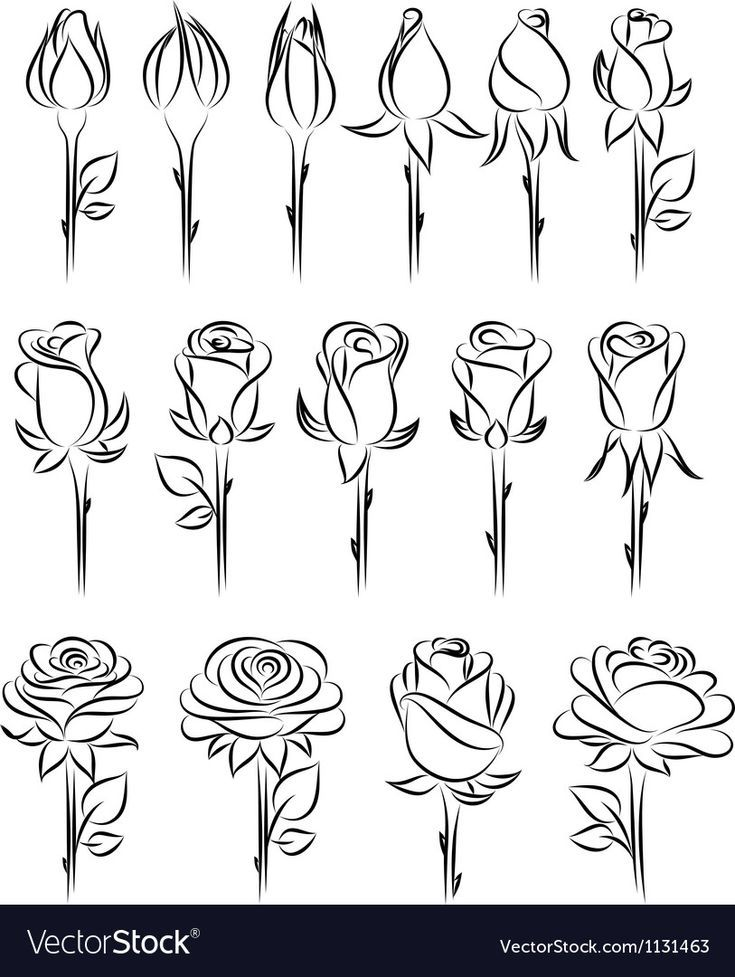 Photo of Rose drawing – doodle