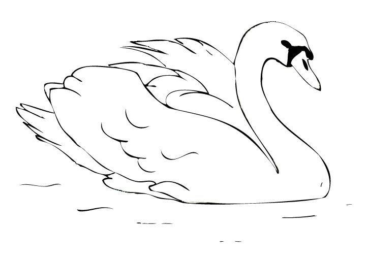 Swan Coloring Book Circle Wildlife Refuge Animal Coloring Books Bird Coloring Pages Coloring Pages