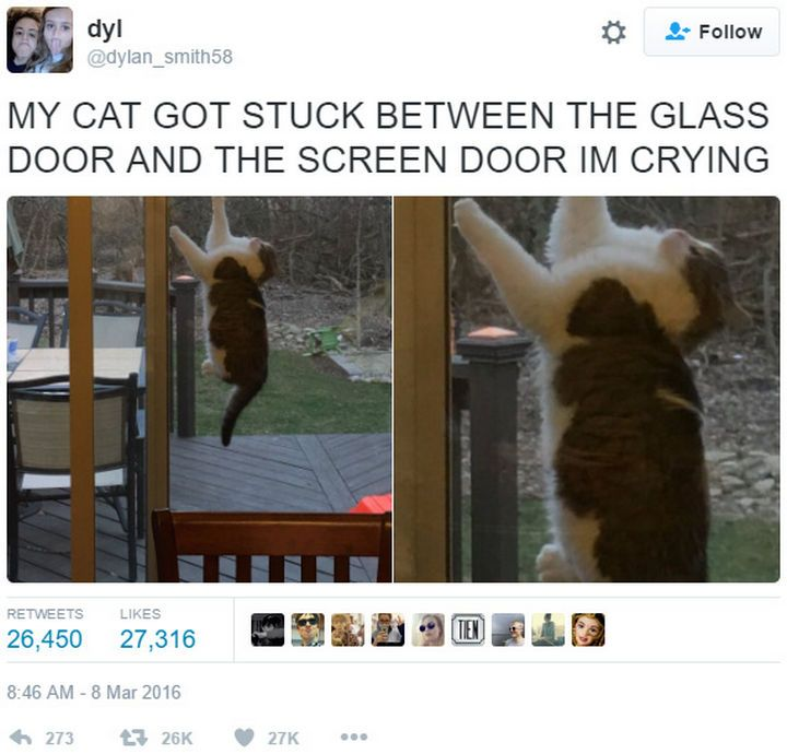 26 Funny Photos That Are Sure To Make You Laugh Funny Pictures Tumblr Funny Funny Animal Pictures