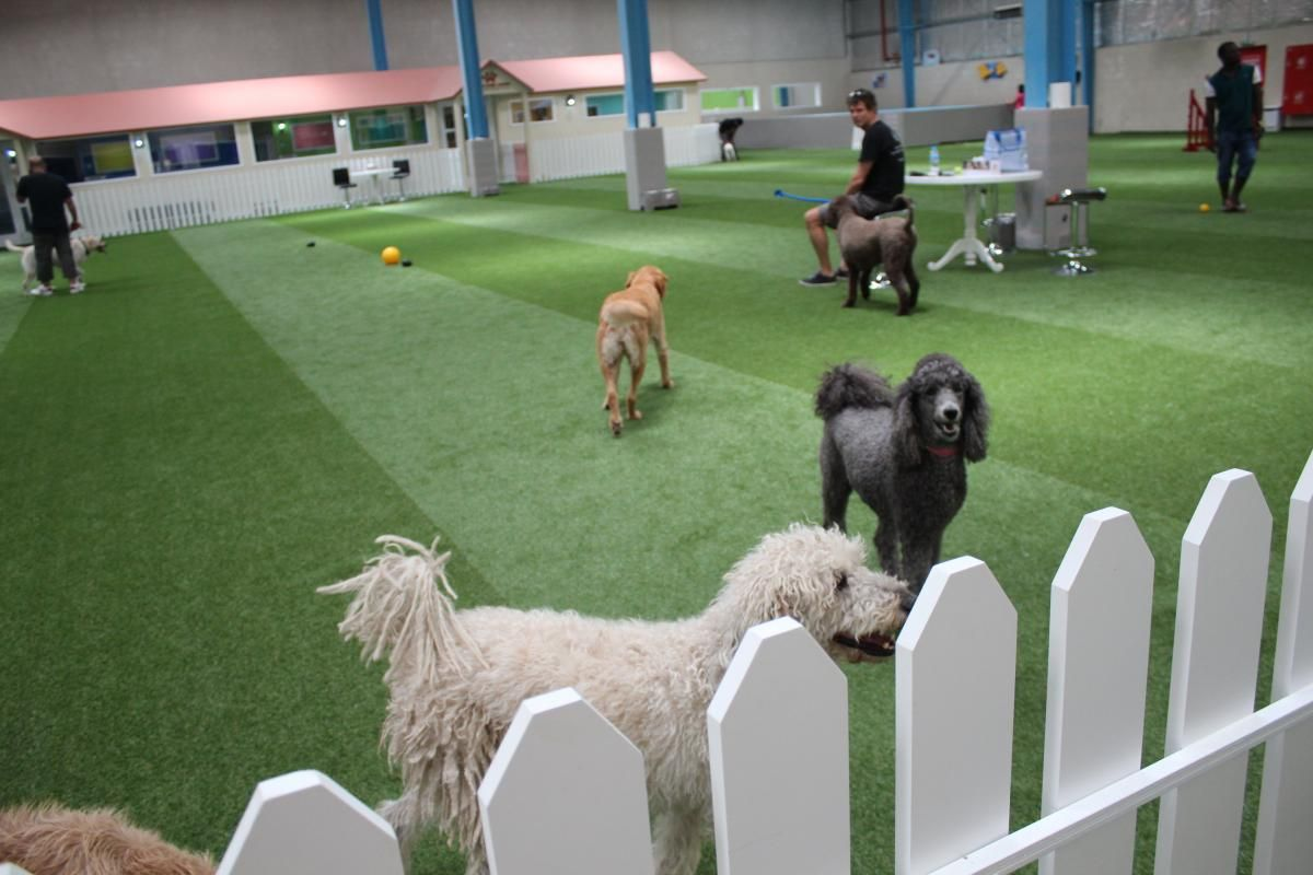 First Dog Park In Uae To Open In February Pet Resort Luxury Pet Dog Park