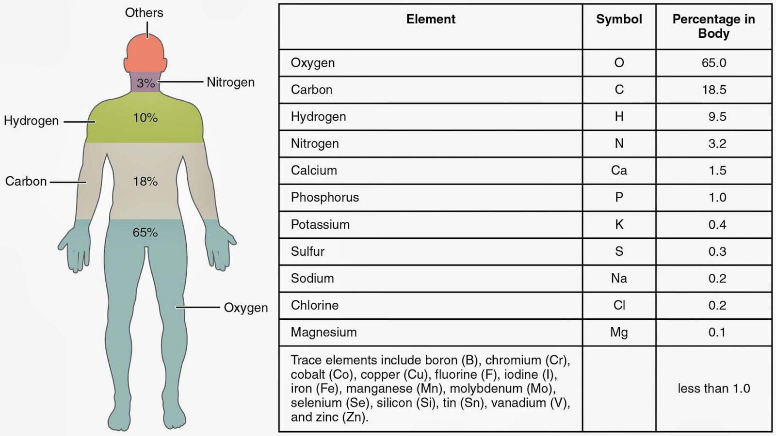 Elements In The Human Body Worksheet Human Body Anatomy And Physiology Particles Of Matter