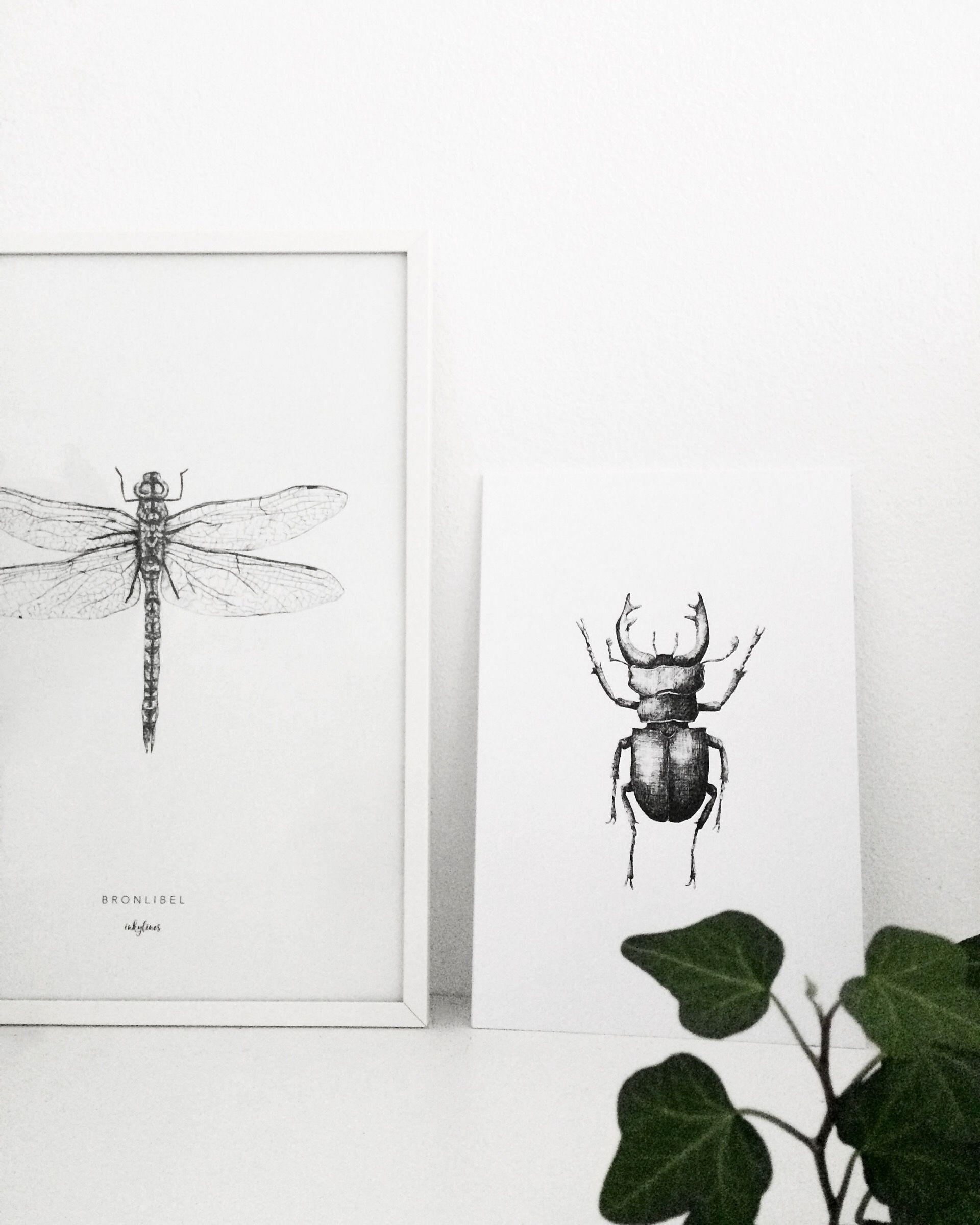 Libelle en vliegend hert | dragonfly & stagbeetle
