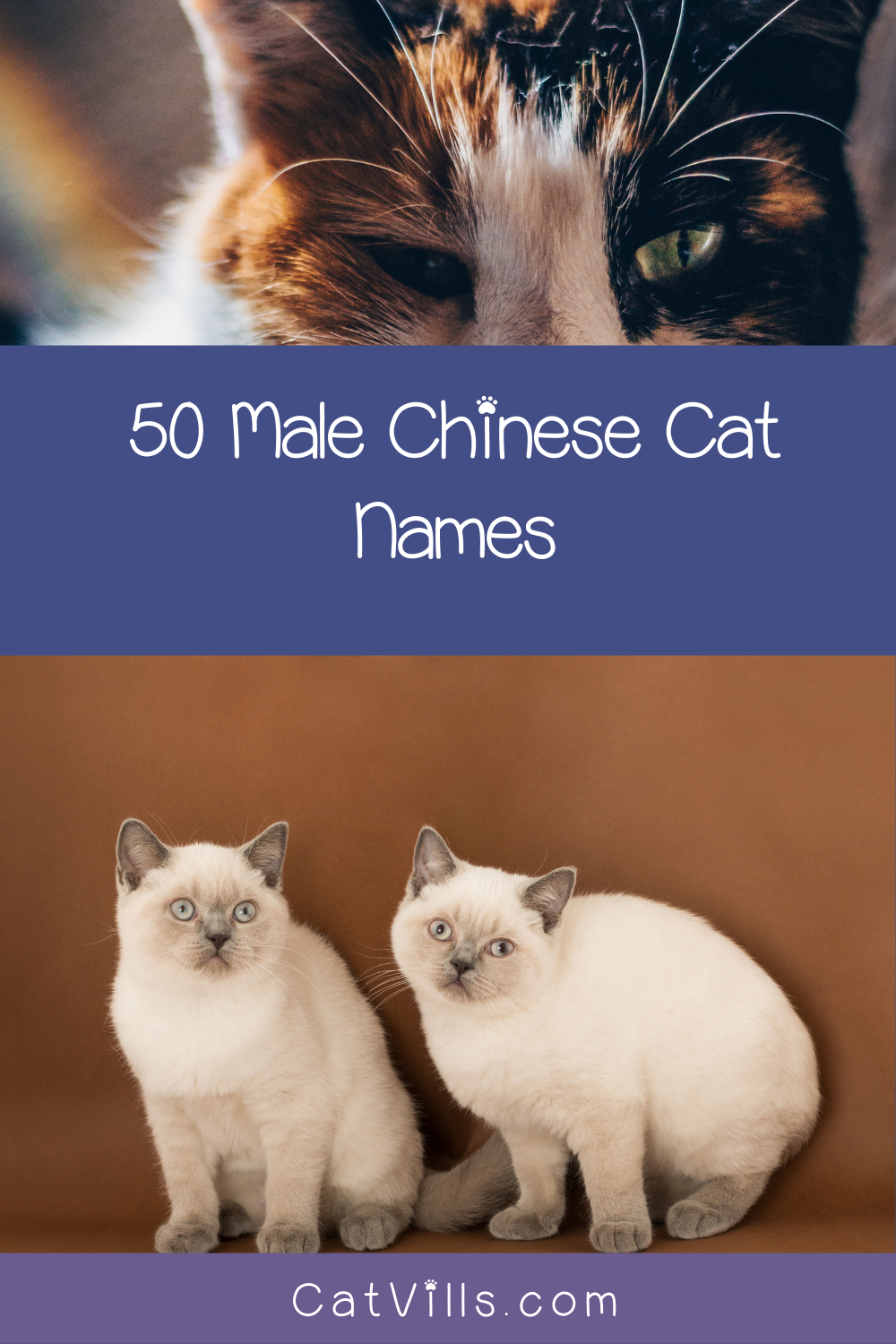 100 Exceptional Chinese Cat Names For Your New Kitten Catvills In 2020 Cat Names Funny Cat Memes Cats