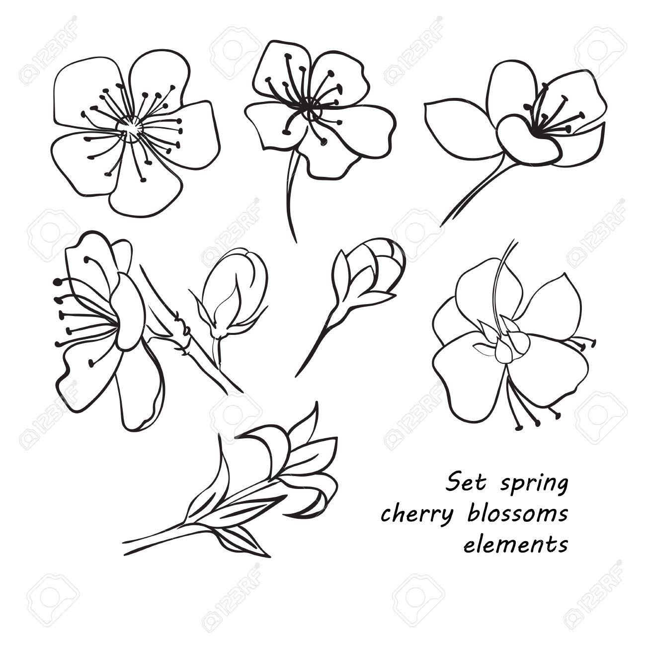Set De Fleurs De Printemps Fleurs De Cerisier Dessin A La Main Noir Et Blanc Vector Il Fleur De Cerisier Fleur De Cerisier Dessin Comment Dessiner Une Fleur