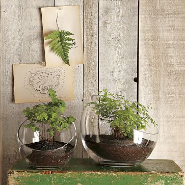 I love the Open-Face Terrariums on westelm.com... but get them from Crate and Barrel for cheaper!!!!