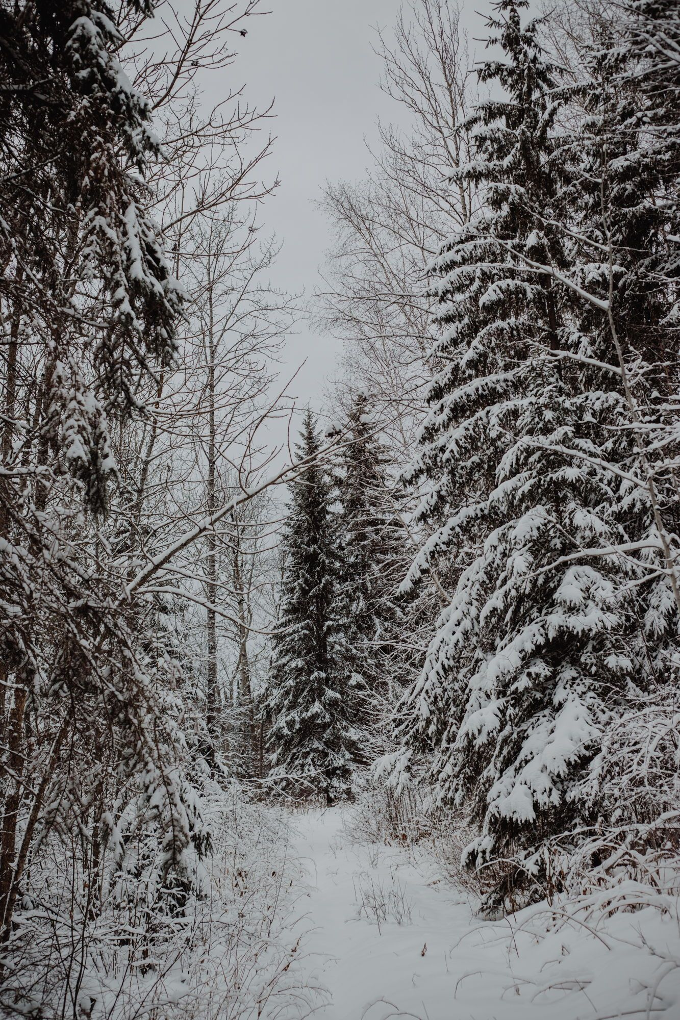 Зима, холод в картинках  52e0cdc865dfde64635961cf7cb9ef3c