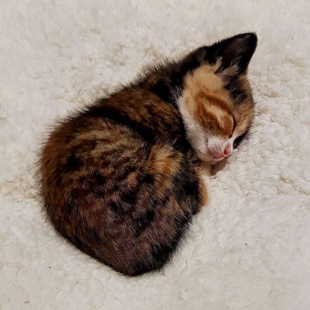 épinglé Par Tou Ta Sur قطط Cats Chat Chaton Mignon