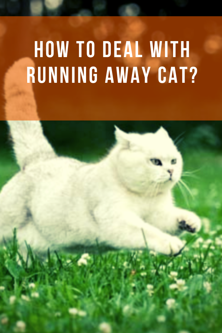Find Out Why Cats Go Away To Die Cats Cat Facts Cat Hiding