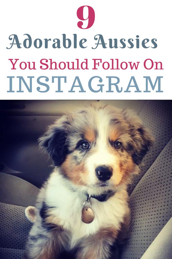 9 Aussies You Need To Start Following Today On Instagram Australian Shepherd Shetland Sheepdog Mini Aussie Puppy