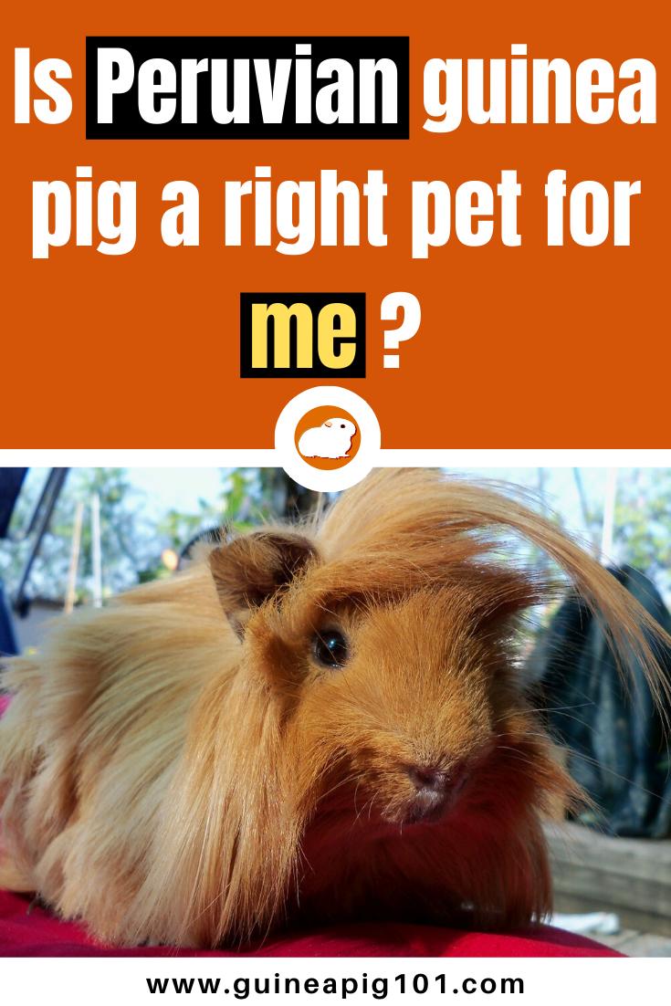 Pin On Pets Galore