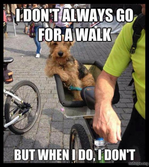 52e20f925fb8093c389d33efcbe05936 now thats a walk meme slapcaption com funny dogs pinterest,Walking Meme